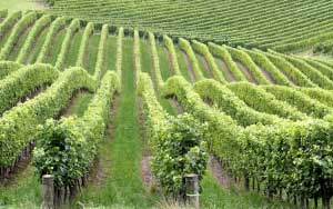 Central Coast - Hunter Valley Winery Tours